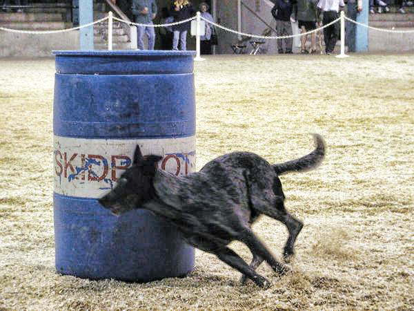 Skidboot-barrel-racing-1